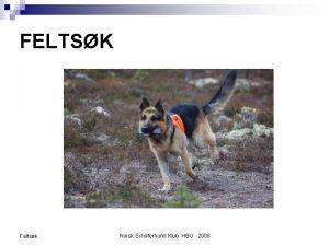 FELTSK Feltsk Norsk Schferhund Klub HBU 2008 INNLEDNING