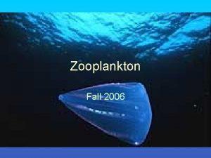 Zooplankton Fall 2006 Plankton Classification Plankton Holoplankton Meroplankton