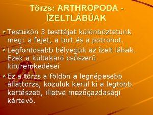 Trzs ARTHROPODA ZELTLBAK Testkn 3 testtjat klnbztetnk meg