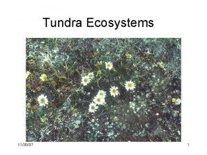 Tundra Ecosystems 113007 1 Tundra distribution origin High