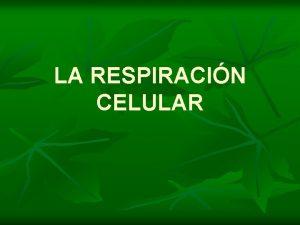 LA RESPIRACIN CELULAR Respiracin celular n La degradacin