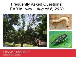 Frequently Asked Questions EAB in Iowa August 6