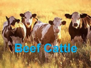 Beef Cattle BEEF CATTLE FACTS The United States