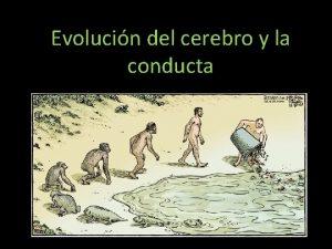 Evolucin del cerebro y la conducta Teora de