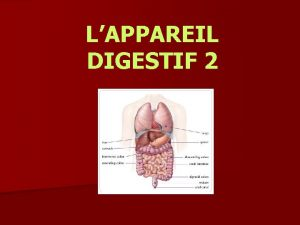 LAPPAREIL DIGESTIF 2 LE GROS INTESTIN n Du