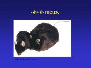 obob mouse Science 1996 December 6 274 1704