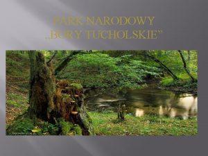 PARK NARODOWY BORY TUCHOLSKIE Park Narodowy Bory Tucholskie