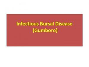 Infectious Bursal Disease Gumboro Defination Infectious bursal disease
