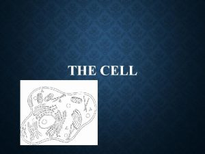 THE CELL 7 THINGS 7 THINGS HOW DID