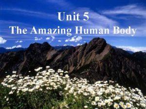Unit 5 The Amazing Human Body 2007510 1