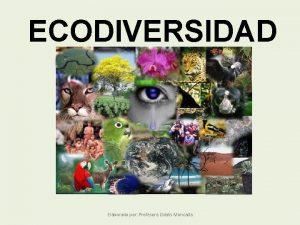 ECODIVERSIDAD Elaborado por Profesora Odalis Moncada Es la