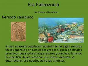 Era Paleozoica Era Primaria vida antigua Perodo cmbrico