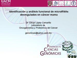 Identificacin y anlisis funcional de micro RNAs desregulados