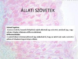 LLATI SZVETEK Szvet fogalma Azonos eredet hasonl felpts