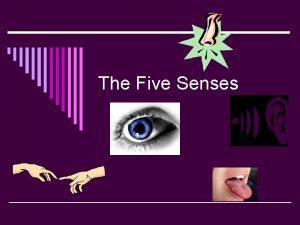 The Five Senses What are the five senses