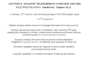 LECTURE 8 SYNAPTIC TRANSMISSION OVERVIEW AND NMJ REQUIRED