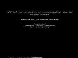 NCX 1 NaCa exchanger inhibition by antisense oligonucleotides