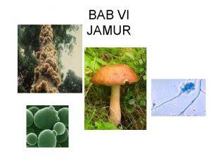 BAB VI JAMUR Bentuk Jamur Uniseluler misalnya Saccharomyces