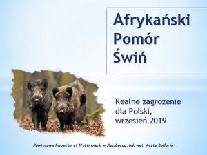 Afrykaski Pomr wi Realne zagroenie dla Polski wrzesie