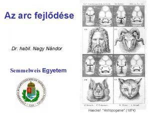 Az arc fejldse Dr habil Nagy Nndor Semmelweis