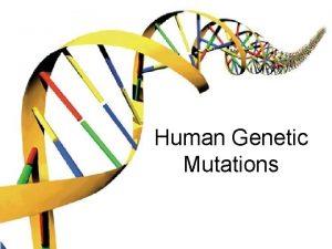 Human Genetic Mutations 2 Main Types of Mutations