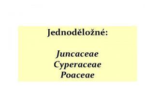 Jednodlon Juncaceae Cyperaceae Poaceae Kapraorosty Nahosemenn Bazln krytosemenn