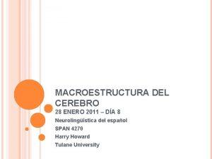 MACROESTRUCTURA DEL CEREBRO 28 ENERO 2011 DA 8