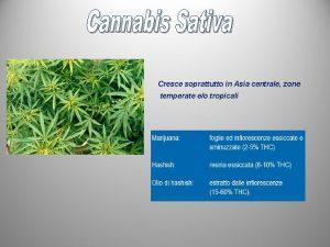 Cresce soprattutto in Asia centrale zone temperate eo