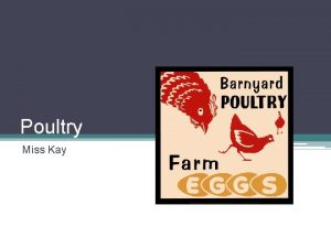 Poultry Miss Kay What An Ideal Chicken Techno