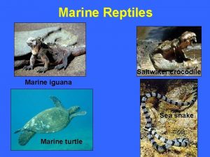 Marine Reptiles Saltwater crocodile Marine iguana Sea snake