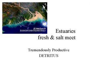 Estuaries fresh salt meet Tremendously Productive DETRITUS Origin