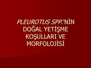 PLEUROTUS SPP NN DOAL YETME KOULLARI VE MORFOLOJS