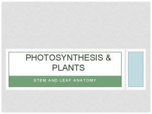 PHOTOSYNTHESIS PLANTS STEM AND LEAF ANATOMY PHOTOSYNTHESIS REQUIRES