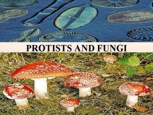 PROTISTS AND FUNGI Commonalities Differences in the Protist