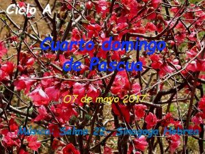 Ciclo A Cuarto domingo de Pascua O 7