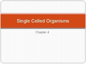 Single Celled Organisms Chapter 4 Single Celled Prokaryotes