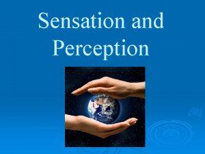 Sensation and Perception Grab a scrap sheet of