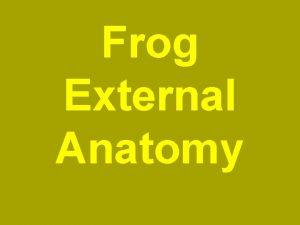 Frog External Anatomy SAP Standard Anatomical Position Dorsal