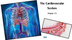 The Cardiovascular System Chapter 11 link Cardiovascular Overview
