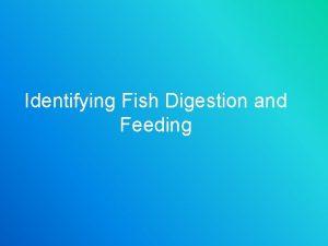 Identifying Fish Digestion and Feeding Identifying Fish Digestion
