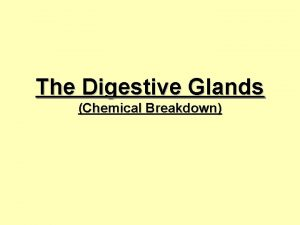 The Digestive Glands Chemical Breakdown The Digestive Glands