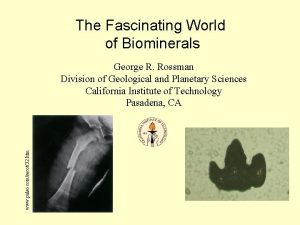 The Fascinating World of Biominerals www pulso comsecot32