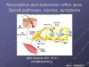 Nociceptive and autonomic reflex arcs Spinal pathways injuries