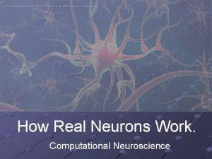 How Real Neurons Work Computational Neuroscience The Neuron