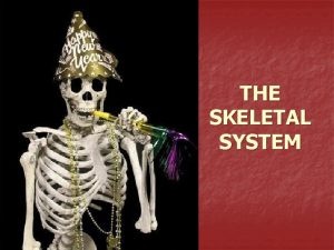 THE SKELETAL SYSTEM What the Skeletal System Does