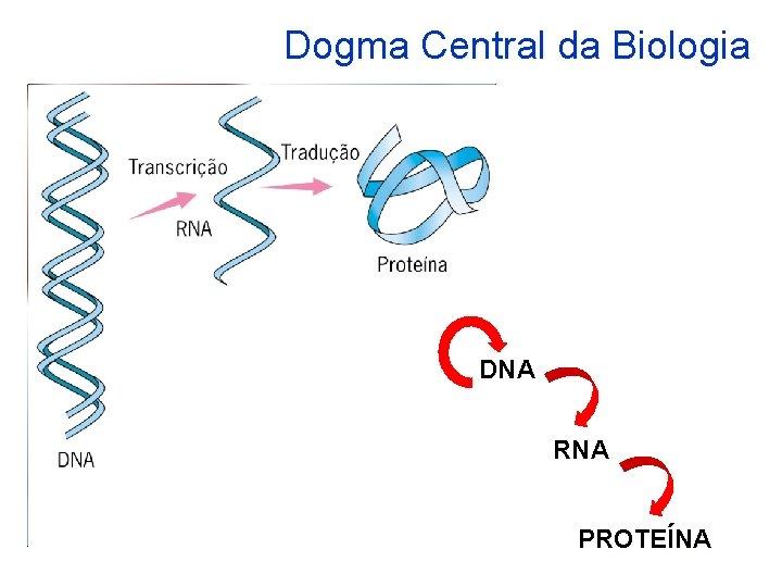 Dogma Central da Biologia DNA RNA PROTENA Unidade