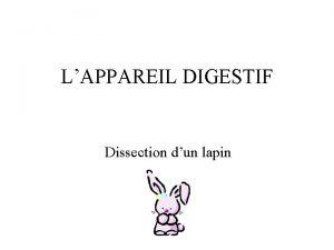 LAPPAREIL DIGESTIF Dissection dun lapin Voici le lapin
