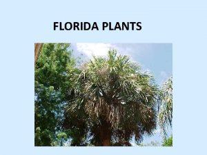 FLORIDA PLANTS What is a native plant Plants