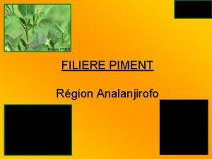 Source PPRR FILIERE PIMENT Rgion Analanjirofo Source PPRR