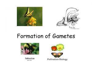 Formation of Gametes Formation of Gametes 1 Anthera